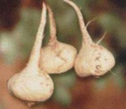 Maca- peruwiańska viagra