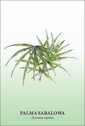 Palma sabalowa- środek na prostatę