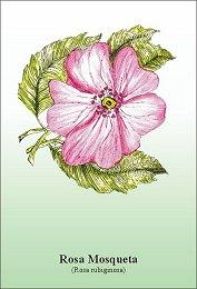 Rosa mosqueta- wygładzanie blizn i zmarszczek.