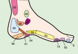 Refleksologia, greendetox, mapa stopy(wewnętrzna)